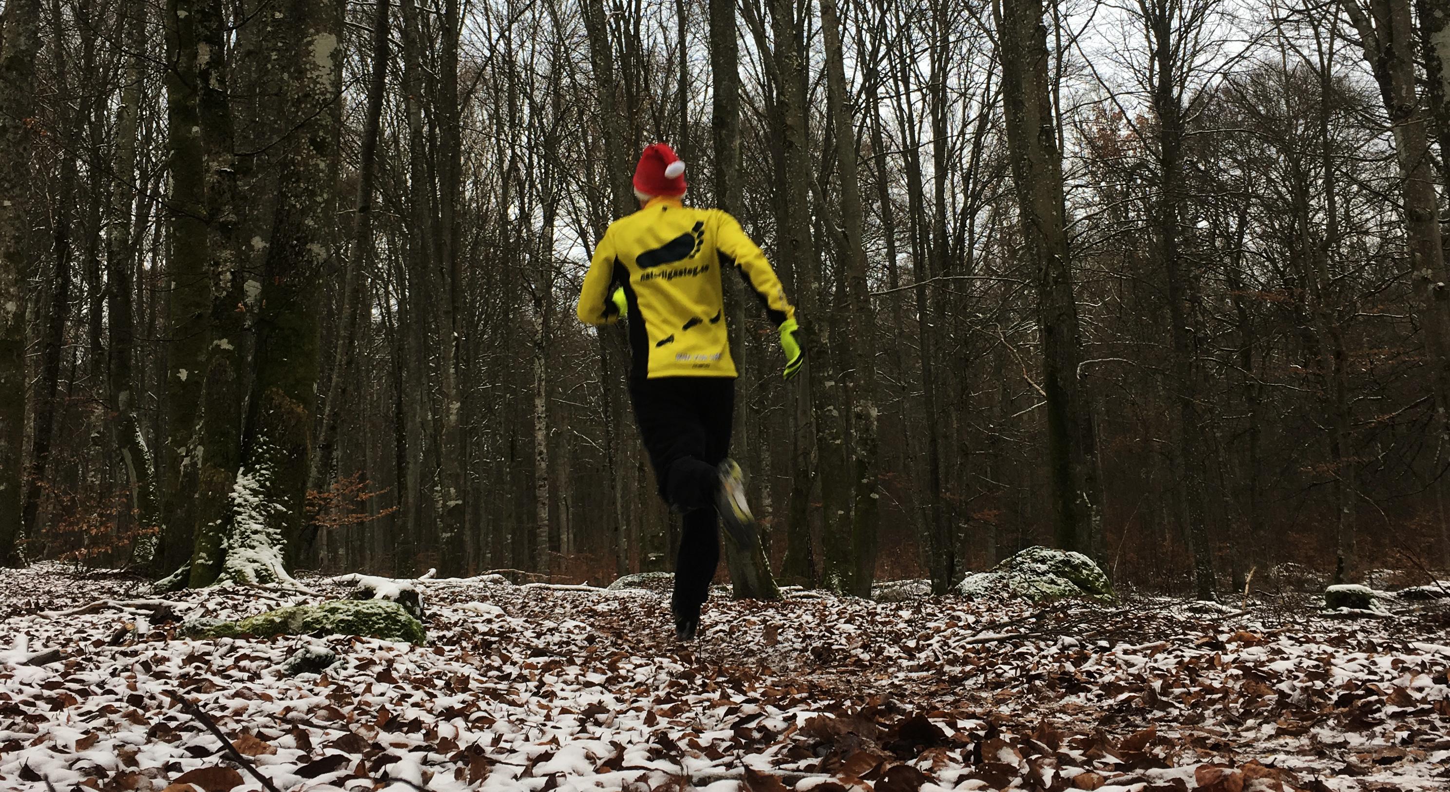 Naturligasteg springer i bokskogen på jul