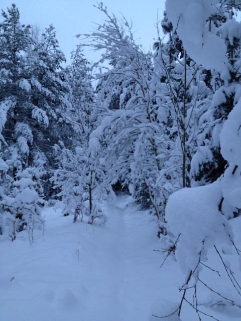 hei mitt vinterland