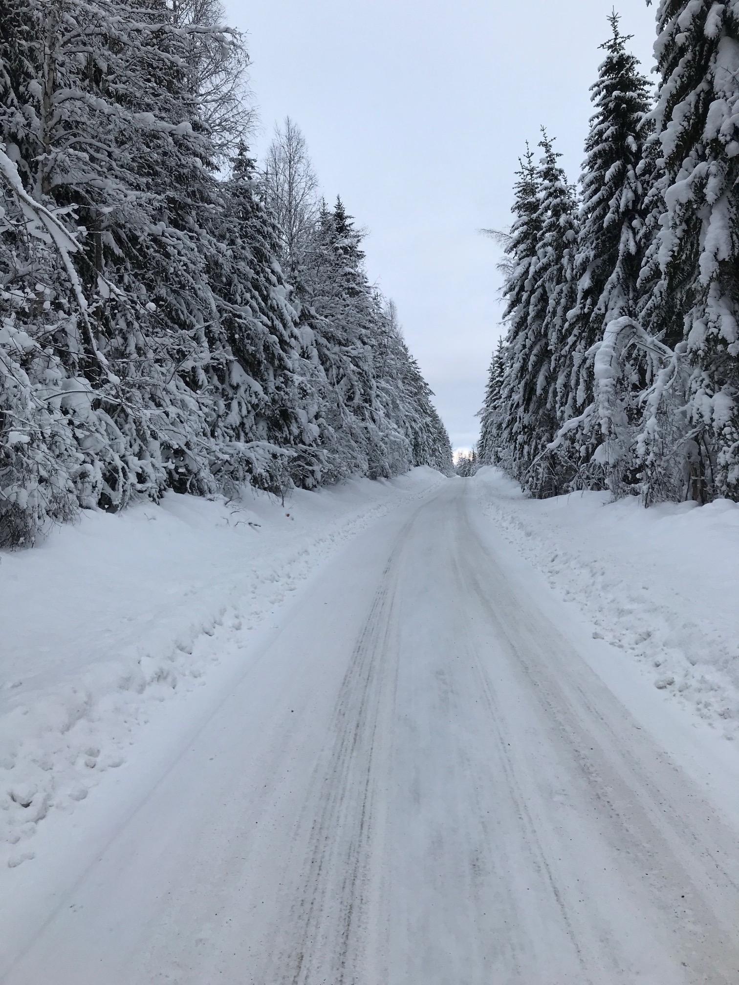 Brattåsvägen med snötyngda granar