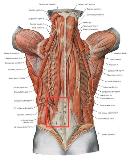 varför ont i ryggen vid mens
