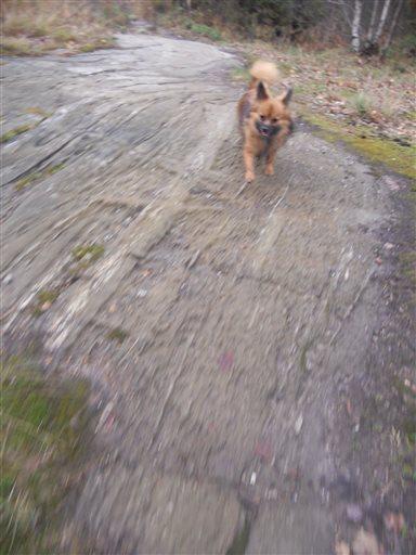 Löpning hund
